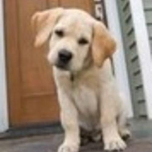 Pet Care Provider Joey Clark's Profile Picture