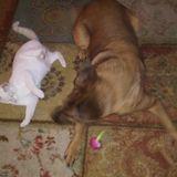 Talana's Animal Nanny Pet Sitting