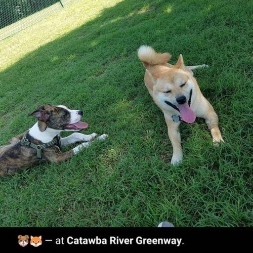 Pet Care Provider Geranio V Gallery Image 1