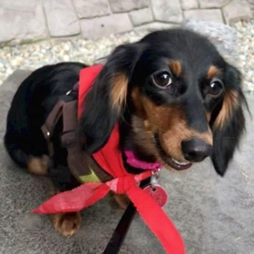 Pet Care Job April G's Profile Picture