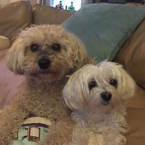 Pet Care Provider Parti Zackular's Profile Picture