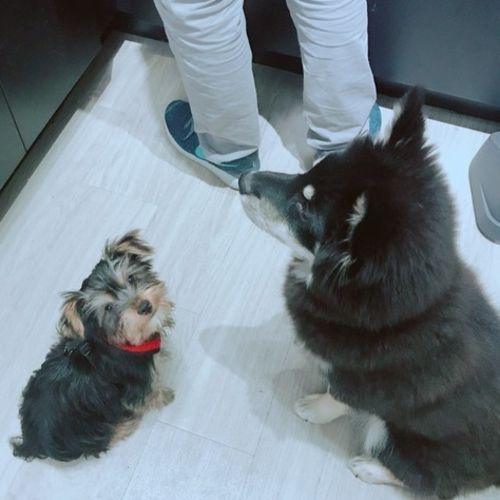 Pet Care Job Xinnan W Gallery Image 3