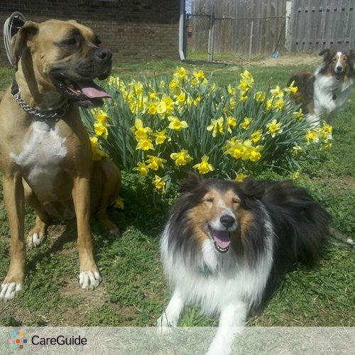 Pet Care Provider Jessica T's Profile Picture