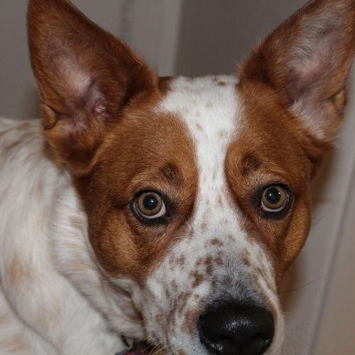 Pet Care Job Shelby J's Profile Picture