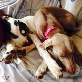 Dog Walker, Pet Sitter in Ware
