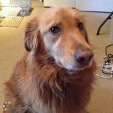 Pet Care Provider in Portland