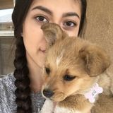 Experienced Dog and Cat Sitter in Las Cruces