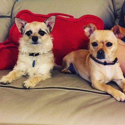Pet Care Job Brenda V's Profile Picture
