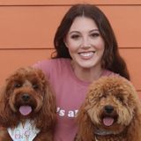 Honest Pet Carer Available Immediately
