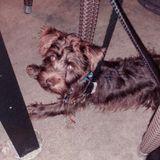 Buckhead Pet Sitter