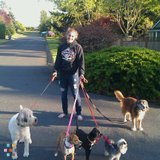 Dog Walker, Pet Sitter in Tacoma
