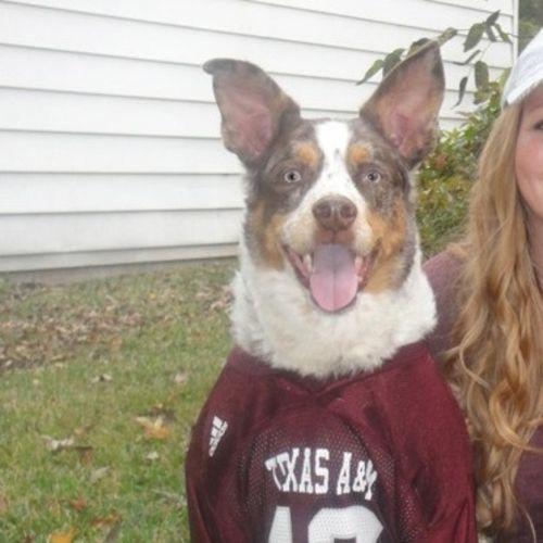 Pet Care Provider Pattie M Gallery Image 2