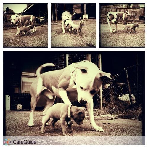 Pet Care Provider Nina Bradford's Profile Picture