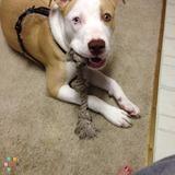 Dog Walker in Beloit