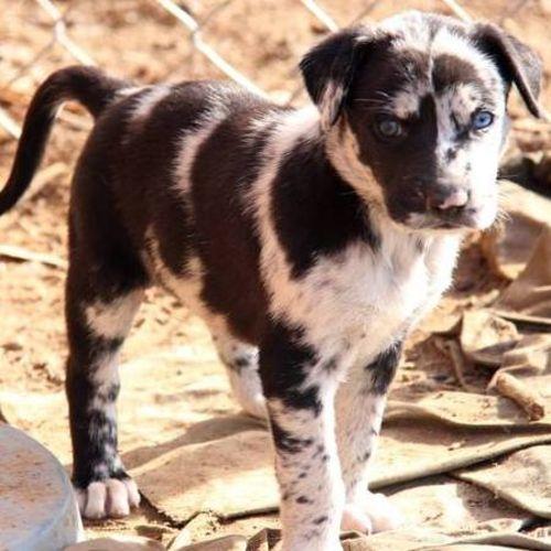 Pet Care Provider Lynda Cypher's Profile Picture