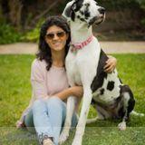 Dog Walker, Pet Sitter in Ontario