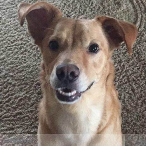 Pet Care Provider Hannah Anton's Profile Picture