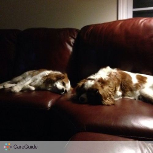 Pet Care Provider Rosemary D's Profile Picture