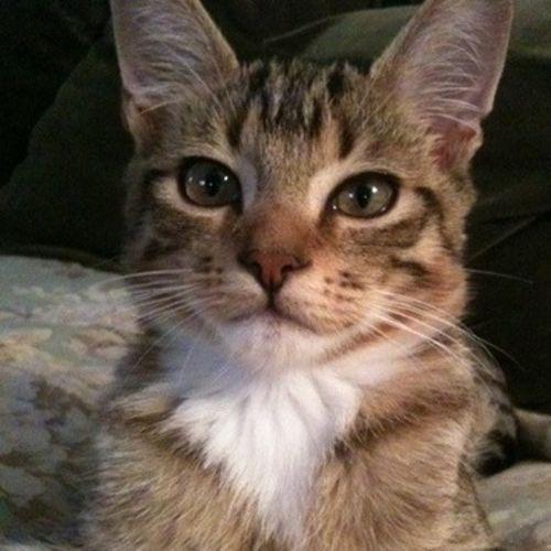 Pet Care Job Gary Grathen's Profile Picture