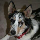 Dog Walker, Pet Sitter in Lincoln City