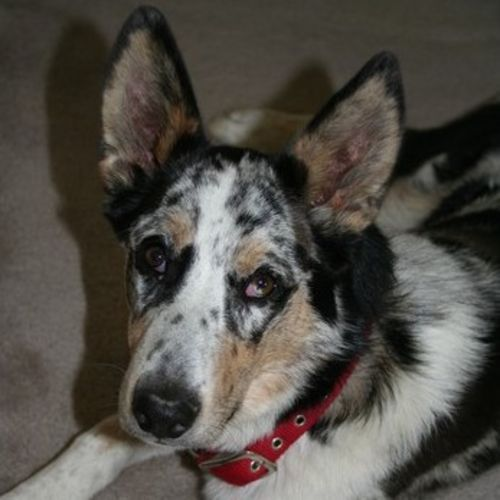 Pet Care Provider Lisa K's Profile Picture