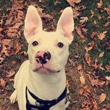 Trustworthy pet Sitter in Frederick