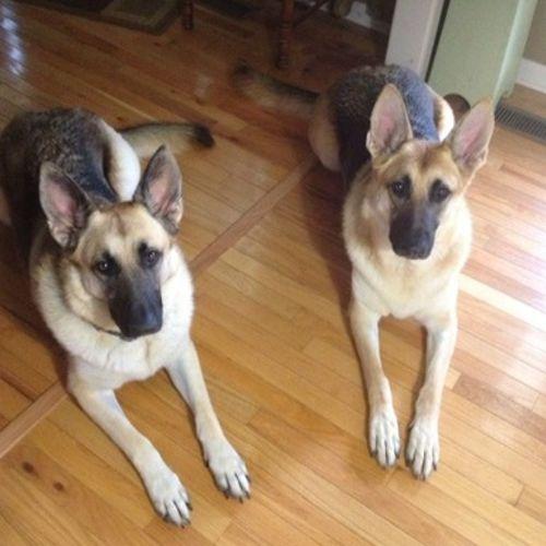 Pet Care Provider Dalyn F's Profile Picture