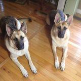 Dog Walker, Pet Sitter in Toney