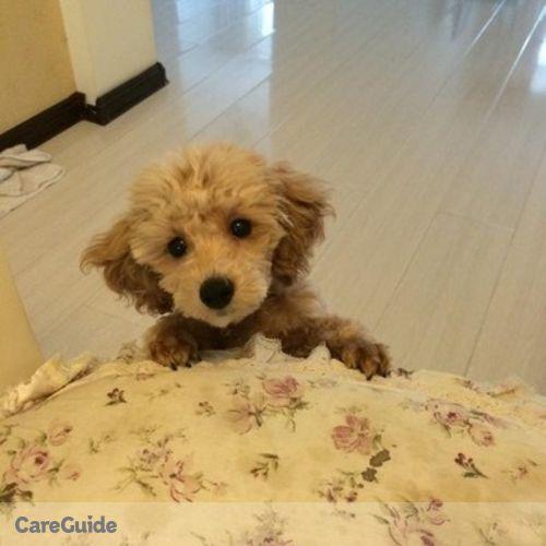 Pet Care Provider Nancy Y's Profile Picture