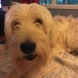 Dog Walker, Pet Sitter, Kennel in Rochester