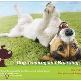 Dog Walker, Pet Sitter, Kennel in Cunningham