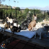 Pet Care Provider in Pomona