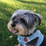 Alexandria, Virginia Dog Sitting Professional Posting