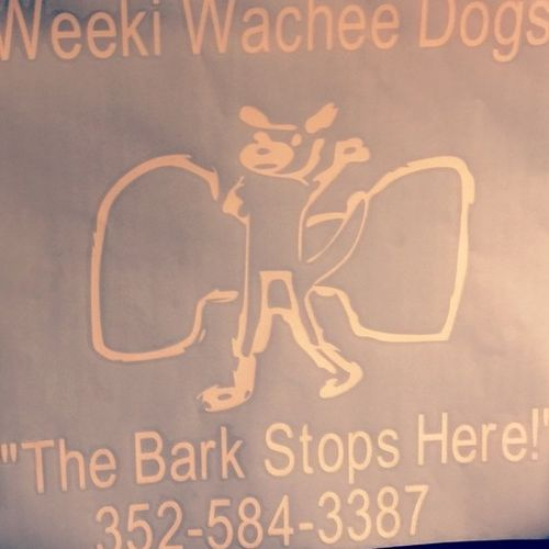 Pet Care Provider Weeki Wachee Dogs D's Profile Picture