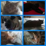 I am an experienced, compassionate and reliable pet sitter. (or as I refer to myself pet nanny)