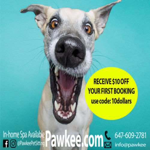 Pet Care Provider Pawkee P's Profile Picture
