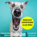 Pawkee Professional Pet Sitting Services Downtown Toronto