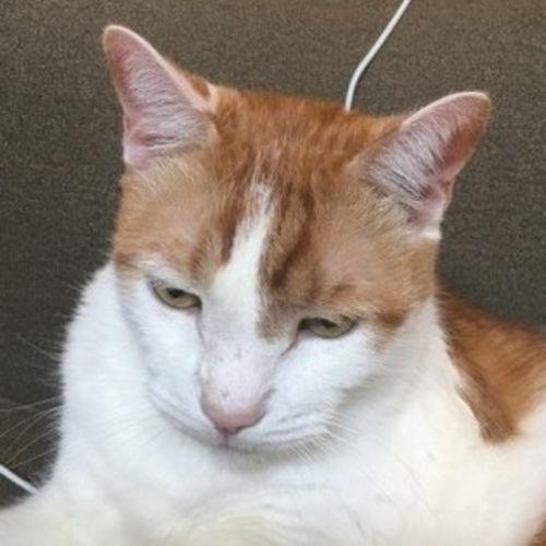 Pet Care Provider Alexei S's Profile Picture
