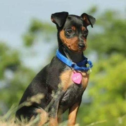 Pet Care Provider Brittney Farrell's Profile Picture