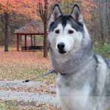Dog Walker, Pet Sitter in Prince Albert