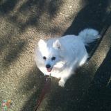Dog Walker in Victoria