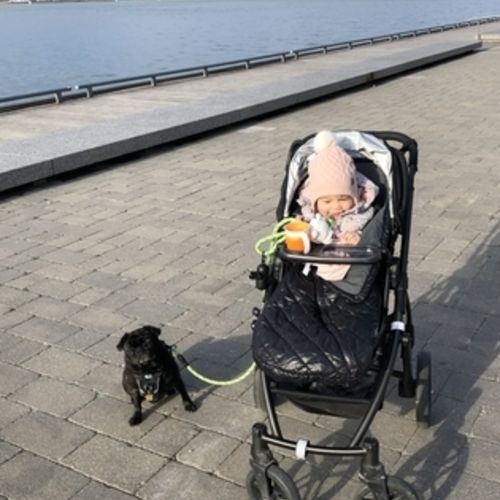 Adorable toddler + pug need part time weekday afternoon/early evening care in Downtown Toronto Harbourfront