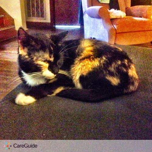 Pet Care Job Amy Bergamo's Profile Picture