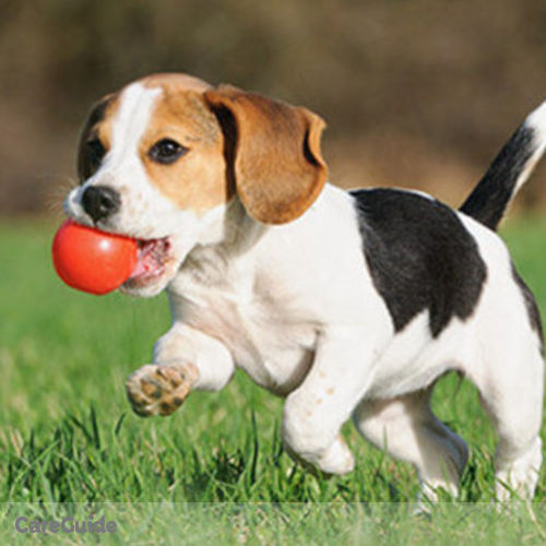 Pet Care Provider Antonio Joseph's Profile Picture