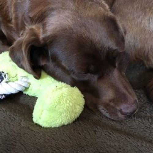 Pet Care Job Brenda Albert's Profile Picture