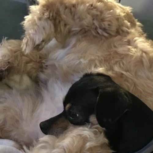 Patient and loving pet sitter wanted! - Dog Walker Job, Pet