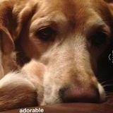 Loving, Compassionate, Responsible pet sitter Alliston, Ontario