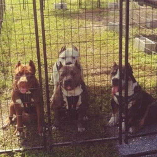 Pet Care Provider Lee Ann B Gallery Image 2