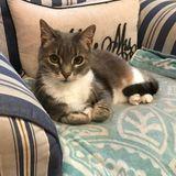 Cat Sitter Wanted in Norwalk, CT