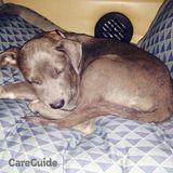 Dog Walker, Pet Sitter in Corpus Christi